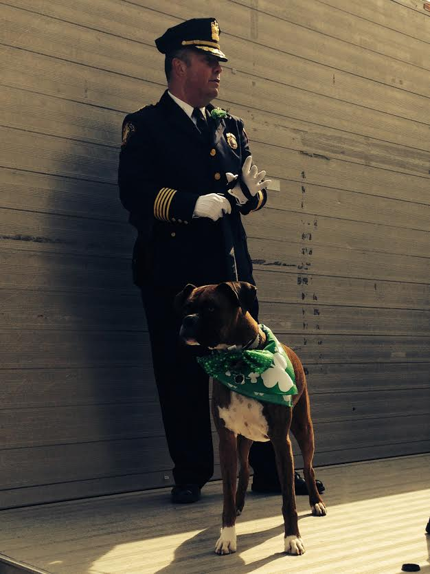 Former Chief Cowan with his boxer dog Zeus at the St. Patrick's Day Parade.